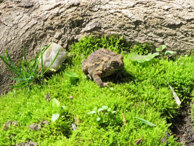 Frog outside in the grass