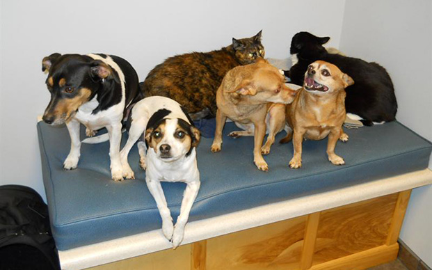 Dogs and cats on an exam table