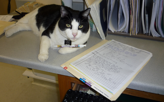 Cat sitting on the reception desk with paperwork