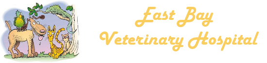 East Bay Veterinary Hospital