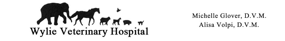 Wylie Veterinary Hospital, Michelle Glover DVM, Alisa Volpi DVM