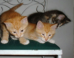 Kittens sitting on a chair