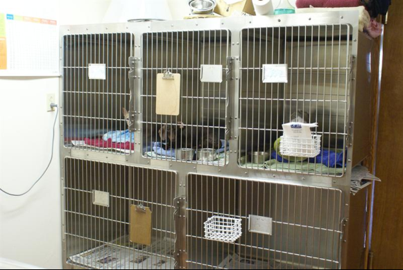 Pet recovery area