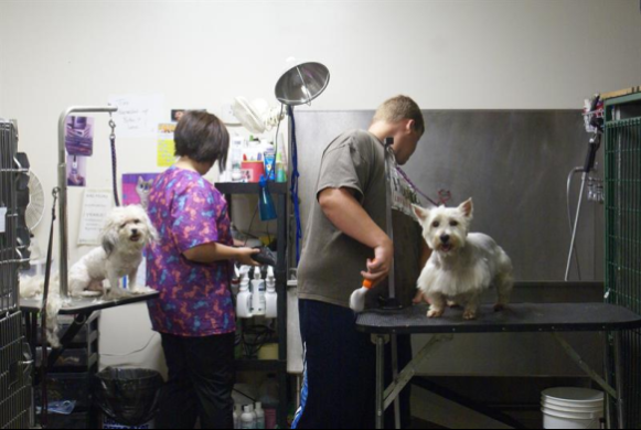 Two dogs getting groomed