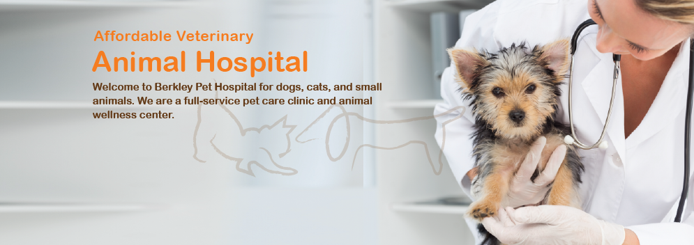 Pet Hospital Near North Hollywood