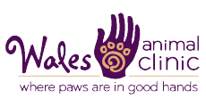 Wales Animal Clinic