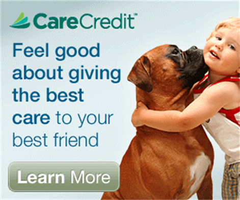Feel Good About Giving the Best Care to Your Best Friend - CareCredit