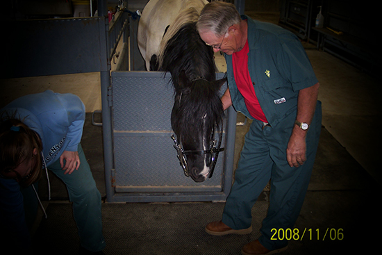 Dr. Mages performing a dental exam on a stallion