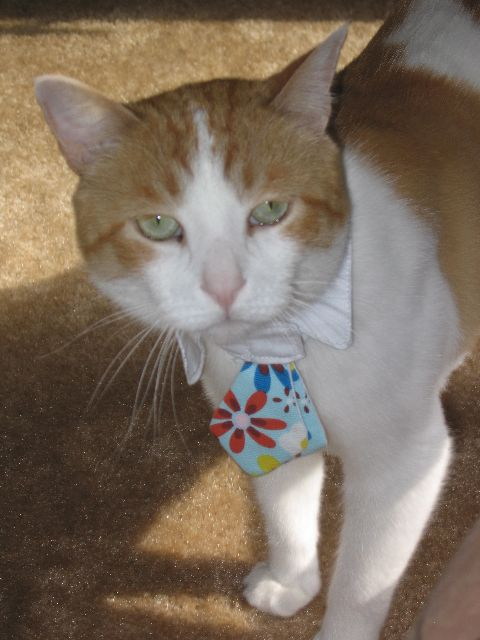 Cat with a tie on