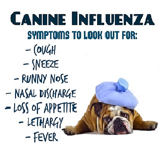 Dog Flu Warning Signs