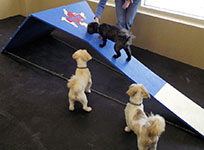 Dogs playing in the indoor dog park