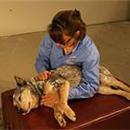 Dr. Busko adjusting a dog