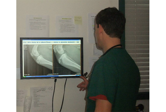 Dr. Christensen reviewing digital x-rays