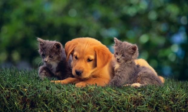 Kittens and puppy in the grass