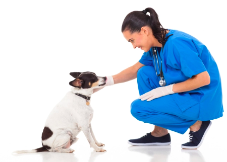 Chasing Tails Mobile Veterinary Services Deal Image