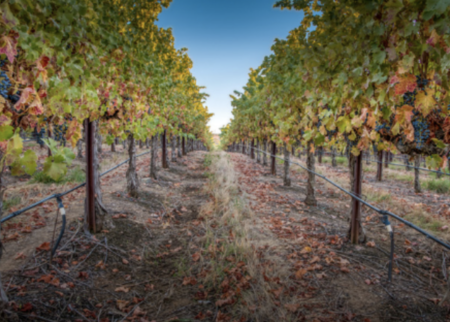 Livermore Valley Winegrowers Association Deal Image