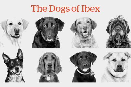 Dogs of Ibex