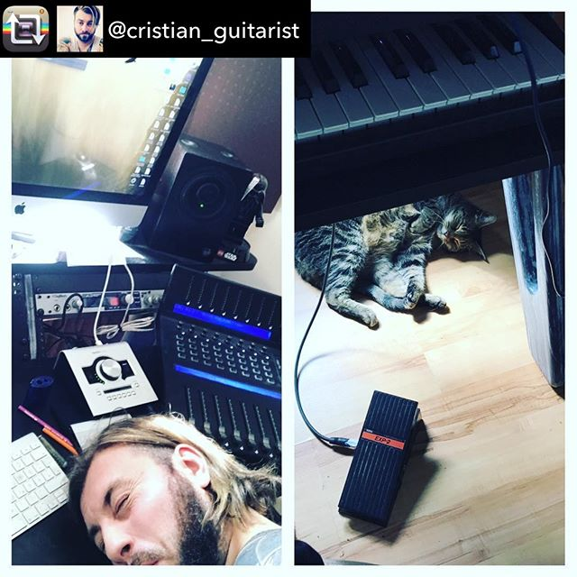 Strictly #music #sleep and #cats
