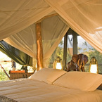 R_cyk_elephant_interior_of_tent_copyright_ian_johnson_b_1