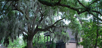 Savannah9_a_3