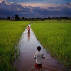 Cambodianfields2_1_b_1