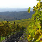 Castiglion_del_bosco_3_b_1