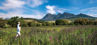 Winelands1_a_3