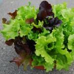 lettuce-bowl_sm-150x150