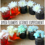 Dyed flowers
