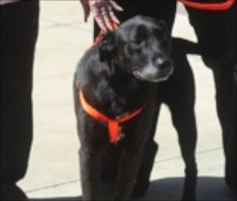 Buddy was reunited with his owners seven years after he disappeared during a wildfire.