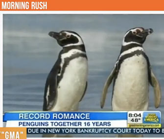 A pair of Magellanic penguins may be among the most faithful in the animal kingdom.