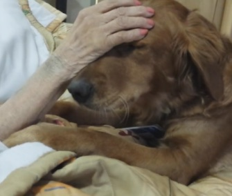 A video of JJ the therapy dog helping an Oregon hospice patient has gone viral.