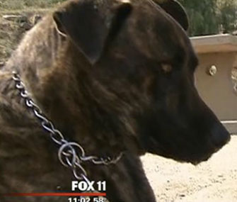Mole, a 1-year-old dog, is being credited with saving the life of a trapped man.