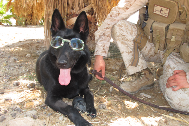 Soldier Dogs Require Special Gear
