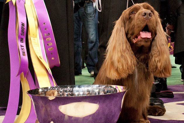 Best in Show: 6 Past Westminster Winners