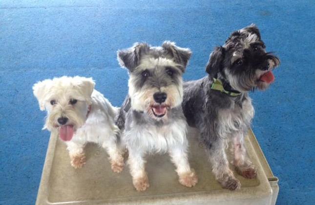 Three dogs sit for graduation photo