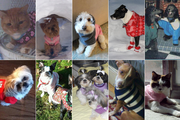 10 Dogs and Cats Dressed Up for Winter