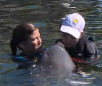 Sarah, a bottlenose dolphin, works with children with disabilities.