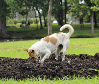 How To Train Your Dog To Stop Digging Holes