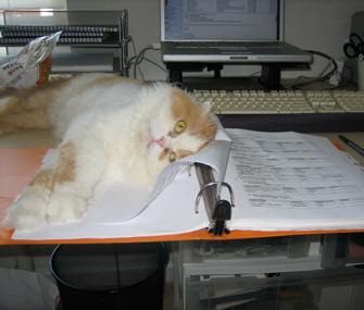 Romeo the cat sitting on desk