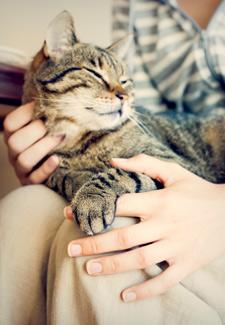 Holding cat in lap
