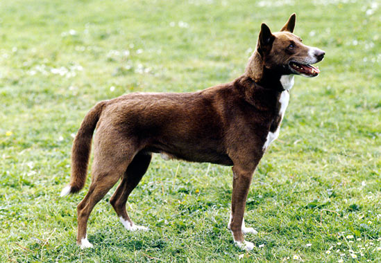 Pictures Of Black Black And Brown Dogs