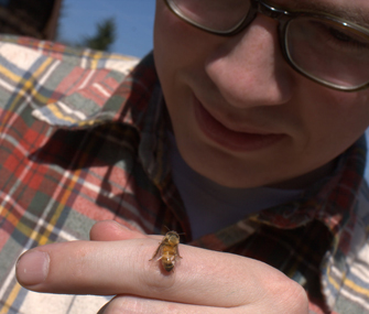 Matt Reed examines a bee