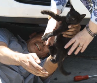 A 5-week-old kitten was found in the bumper of a car after a long road trip.