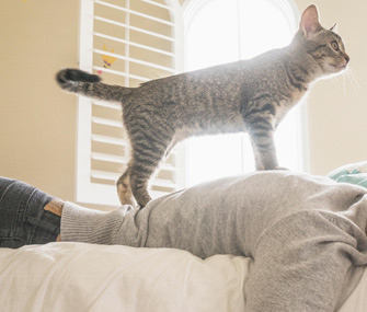 Cat walking on person