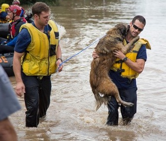 Firefighters Matt Harvey and Michael Cooper rescued a dog from floodwaters.