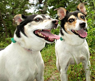 Junior and Papi were surrendered by their New Jersey owner and are still in need of a new home together.