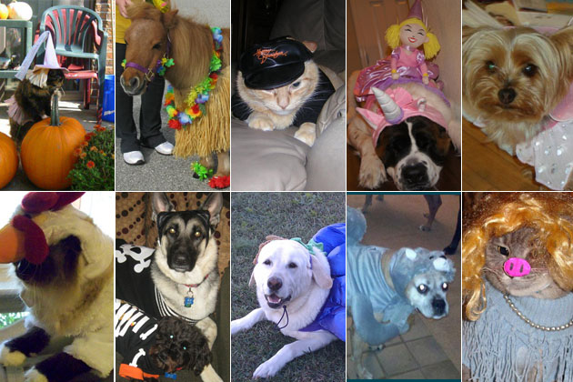 Cutest Pets of Halloween 2011