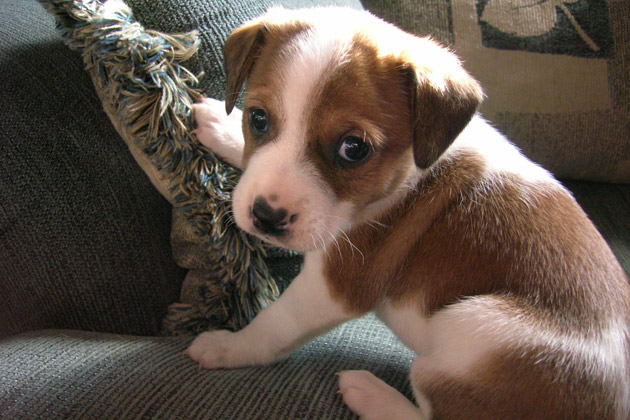 Cute Pet of the Week - September 23, 2011