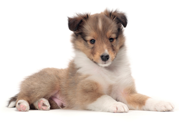 Good Dog Breeds For First Time Pet Owners
